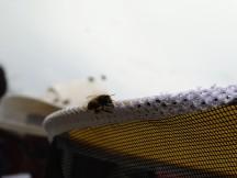 Biene auf Imkerhut